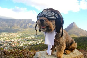http://www.dogonews.com/2012/10/7/mixed-breed-mutts-quest-to-save-other-dogs-turns-into-a-world-woof-tour